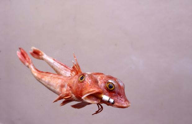 smokefish